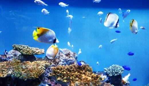 沖縄かりゆし水族館の割引クーポンがお得!アプリの楽しい使い方